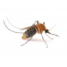Repulsif de Moustiques