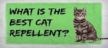 Cat Deterrent
