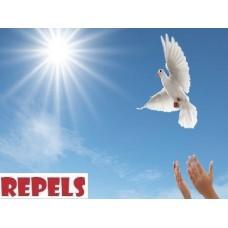Répulsif Anti Pigeons