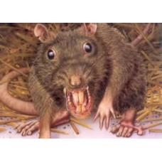Rattenbekämpfung Maulwurf